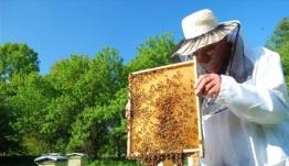 Επιδοτούμενες δράσεις για τους μελισσοκόμους