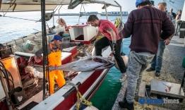 VIDEO: 300 κιλά τόνοι η ψαριά καϊκιού στη Νάξο! (φώτος)