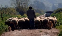 Αγώνας δρόμου για τα σχέδια βοσκής στα νησιά