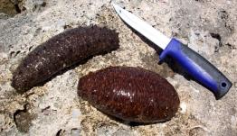 Έρευνα για τα ολοθούρια στα Δωδεκάνησα