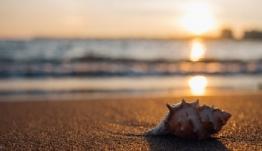 Κορονοϊός: Θα μειωθεί η διασπορά του ιού το καλοκαίρι; - H απάντηση Τσιόδρα