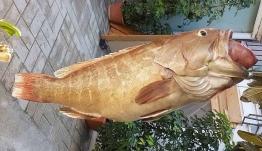 Μεσσηνία: Ψάρεψε σφυρίδα 17,5 κιλών στον όρμο του Ναβαρίνου