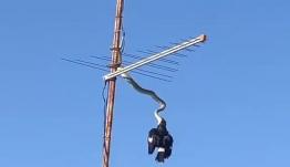Viral: Καρέ-καρέ η στιγμή που ένας πύθωνας κατασπαράζει ένα πουλί στον... αέρα